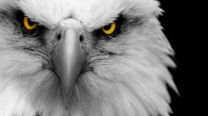 eagle-6